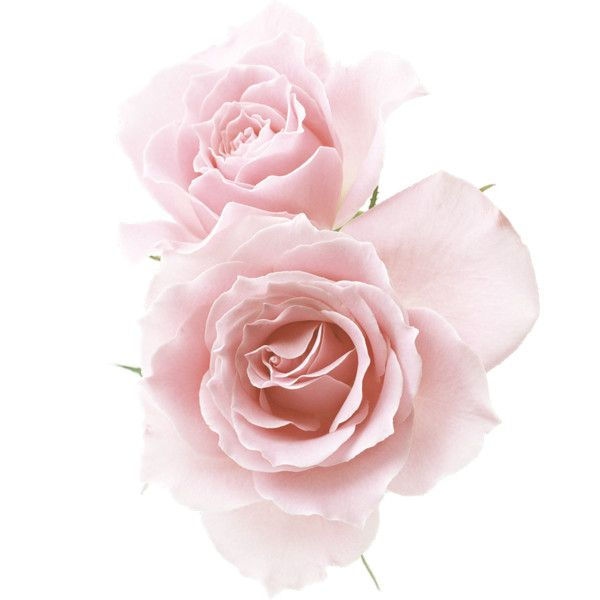 Косметика tianDe — «FL-FTM Flower 08 Pink Roses.png» на Яндекс.Фотках ❤ liked on Polyvore featuring flowers, fillers, backgrounds, pink, decor, effects, embellishments, detail, text and texture