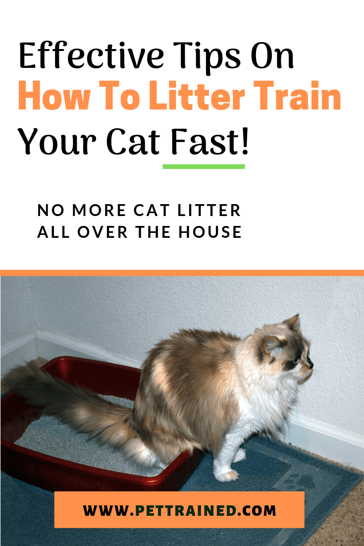 Have You Just Gotten A New Cat Or A New Cat Litter Box Use These Tips On How To Litter Train A Cat Or Kit Litter Training Cat Training Cat Training