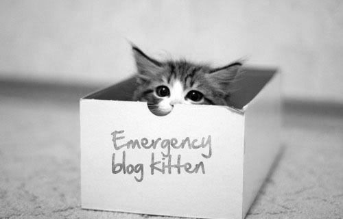 Emergency blog kitten