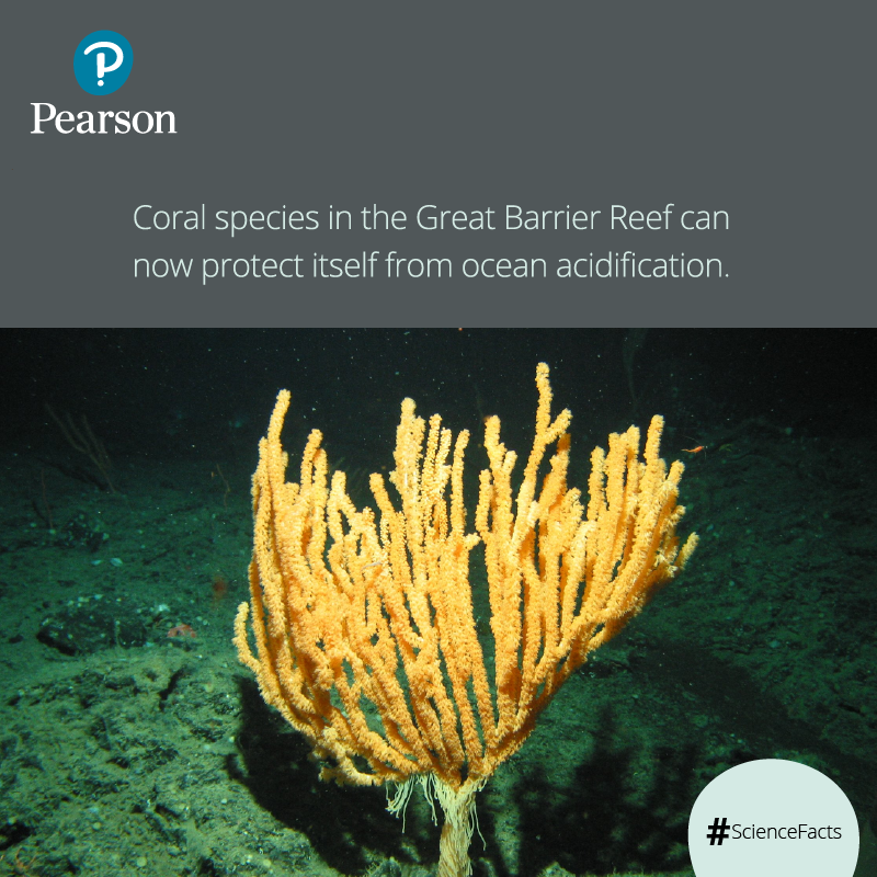 Scientists Have Found A Species Of Coral In Great Barrier