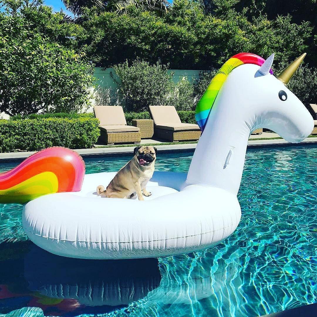 When It S Your Day Off Repost Itsdougthepug Pug Unicorn