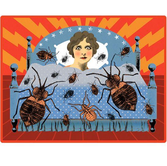 shaneharrisonbedbugs