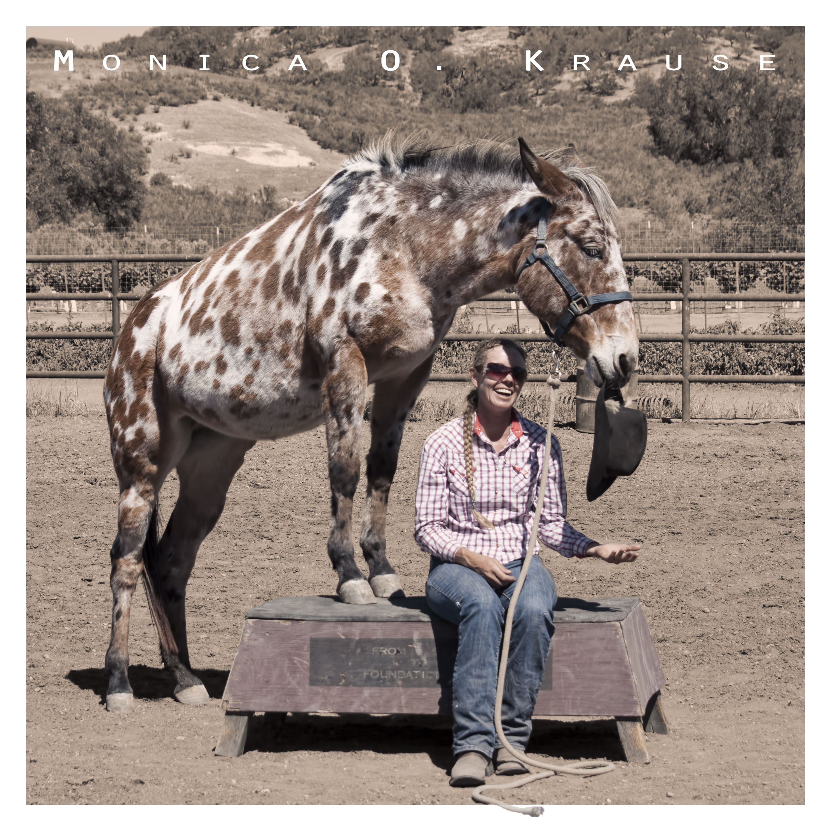 I love mules | Mules,Donkeys,Jackasses | Appaloosa for sale