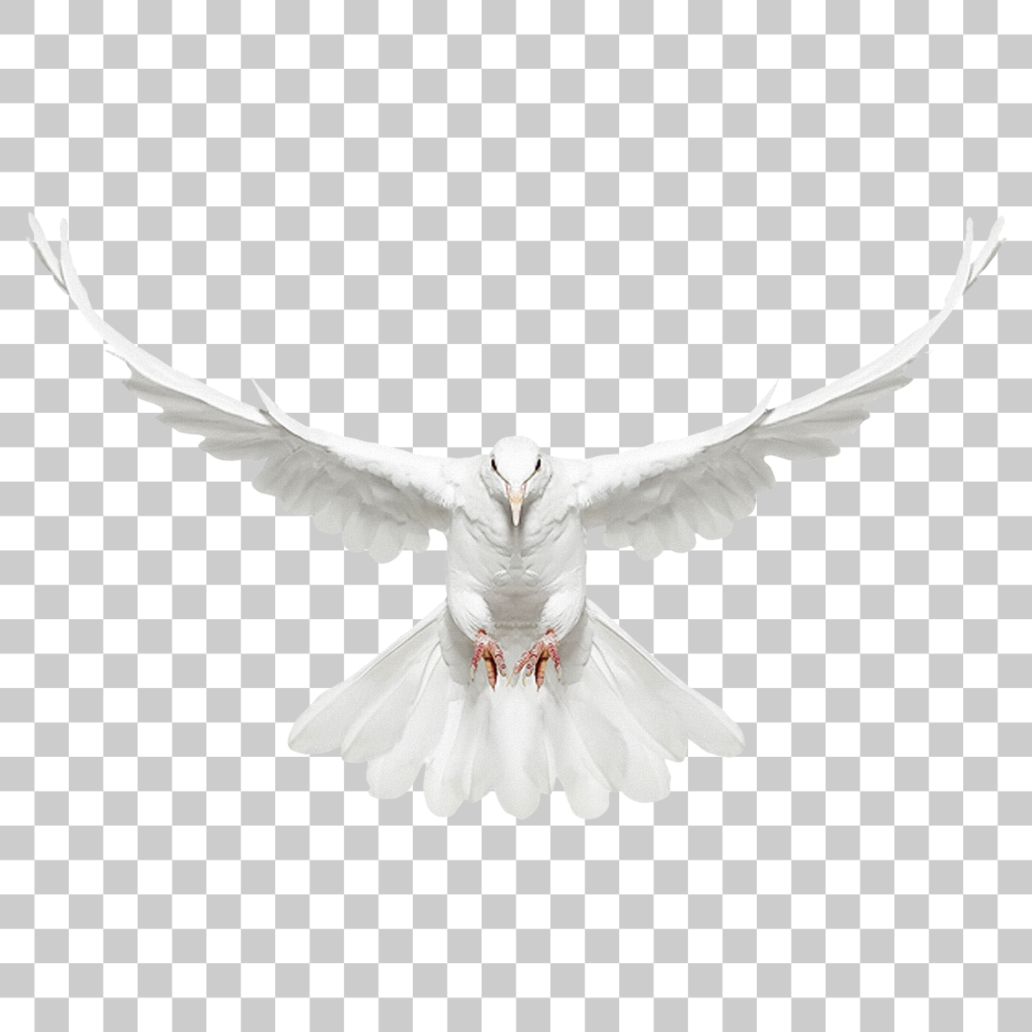 Dove Bird Png Image With Transparent Background Studio Background Images Png Images Light Background Images