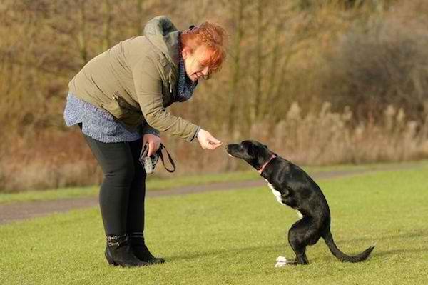 4e080cab9e A cadela foi regatada e adotada e hoje já está adaptada à vida sobre duas  patas