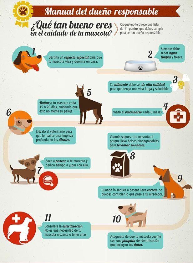 Eres Buen Dueño De Perro Lee Esto Baby Dogs Pet Dogs Dog Care