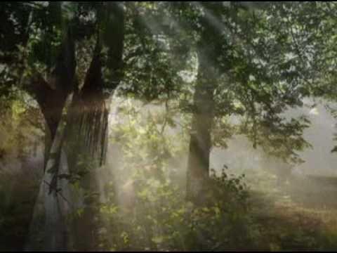 NICHOLAS GUNN - Magic Forest (+playlist)