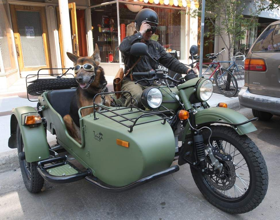 dog in sidecar | hobbiesxstyle