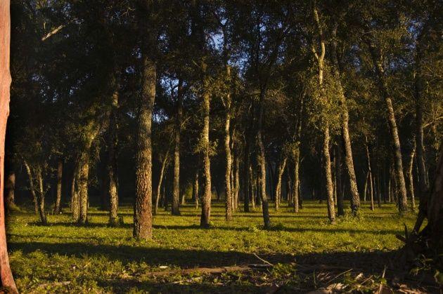 Parque Nacional Chaco