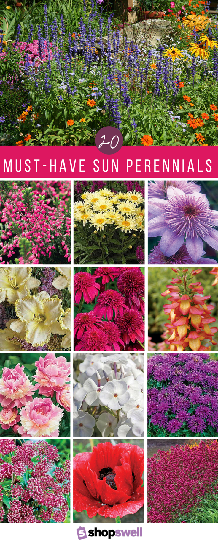 20 Of The Best Sun Perennials For Your Garden Gardening And