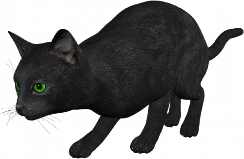 Black Cat Png Transparent Image Black Cat Pngget To Download Free Black Cat Png Vector Photo In Hd Quality Without Limit In 2020 Image Cat Black Cat Cat Silhouette