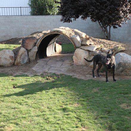 Dog Playground On Pinterest Dog Boarding Dog Agility