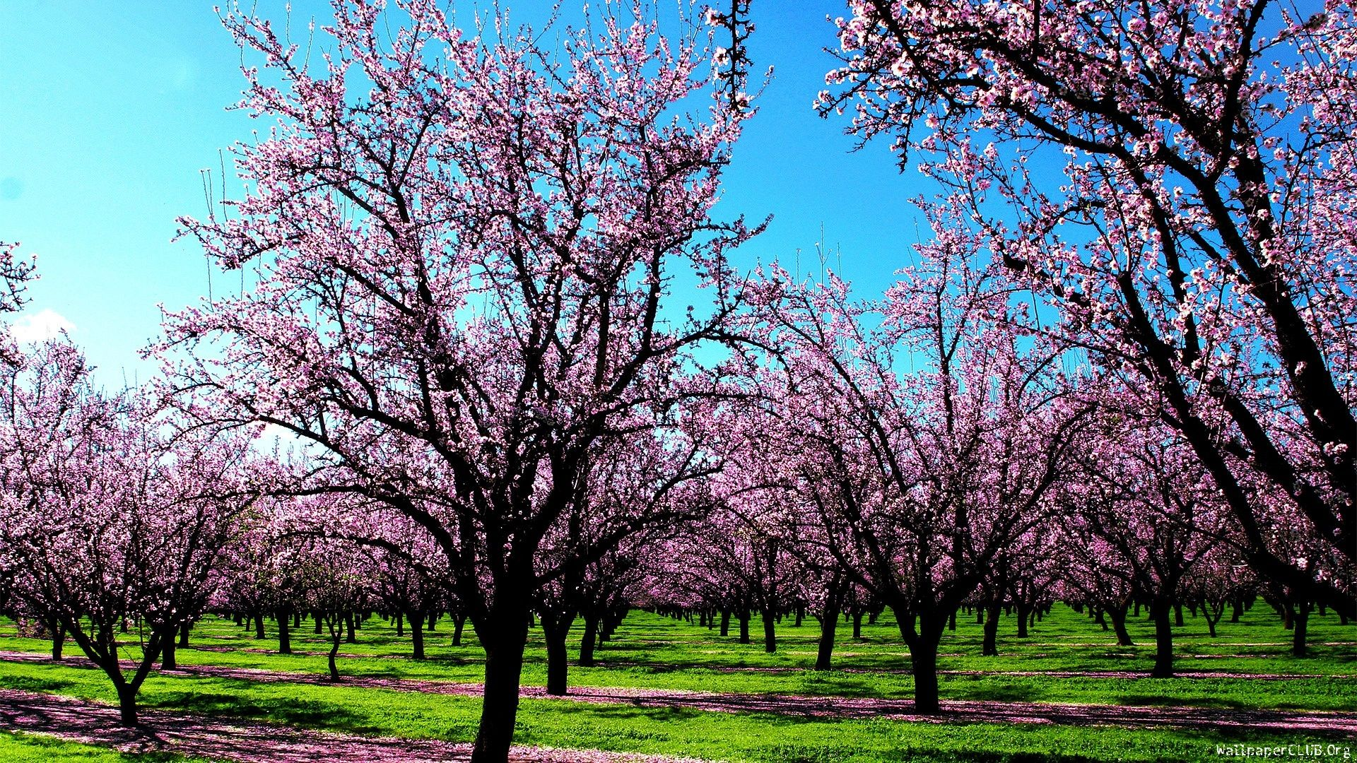 Spring Season Beautiful Examples of Spring Season Photos