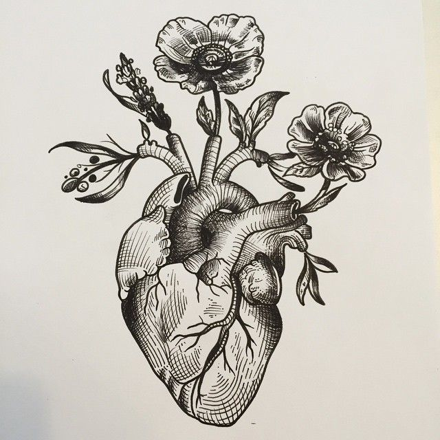 Anatomical heart woodcut google search