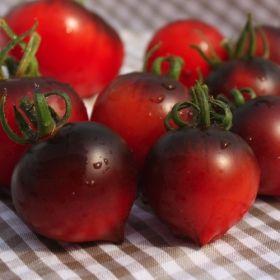 Lycopersicon esculentum 1000 ! alte Samen Tomate Pear Yellow robuste Sorte