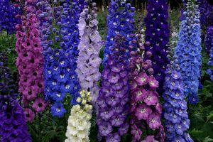Photo of 17 Low Maintenance Perennials