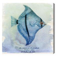 Seba Fish