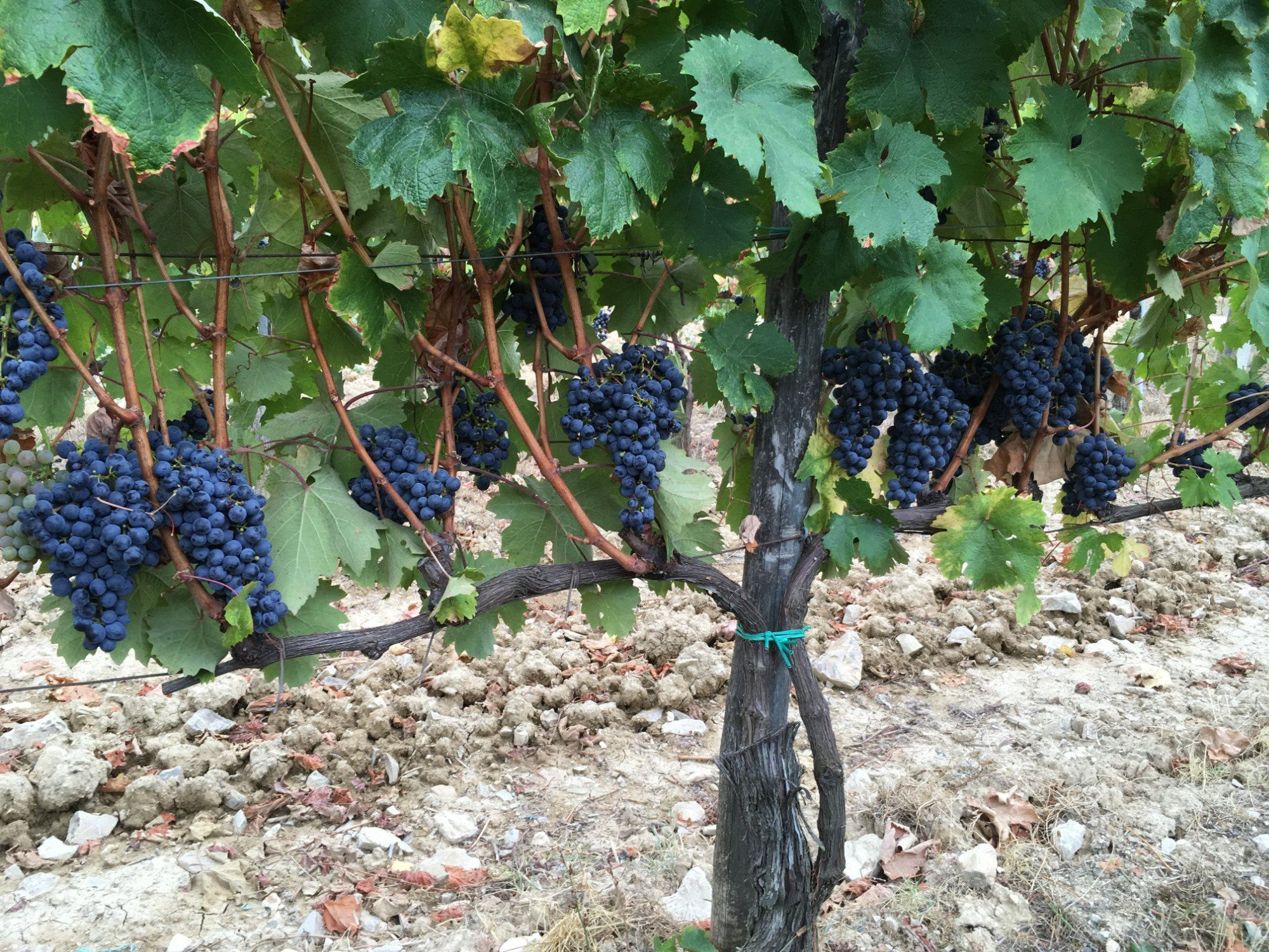 **Tuscan Wine Tours with Angie (Florence, Italy): Top Tips ...
