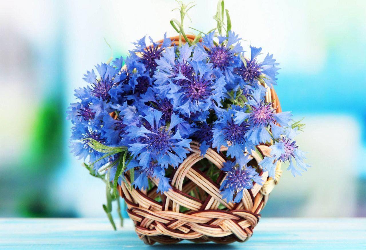 Пин от пользователя Vera A на доске Flowers | Цветы ...
