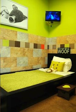 San Diego Based Petco Is On Track To Unveil Four More Pooch Hotels This Year After Opening A Luxury Dog Boarding Fac Dog Boarding Facility Luxury Dog Dog Hotel