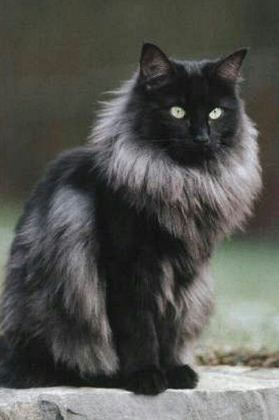 Pin On Dog And Cat Breeds