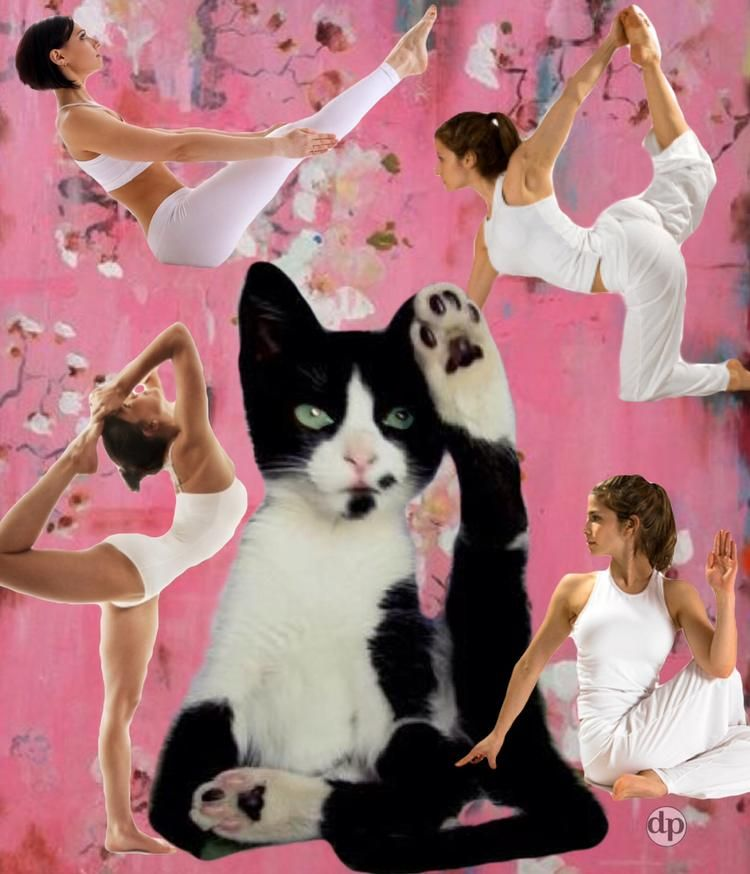 Yoga Cat.  Ha, unlike you humans, I don't have to hold up my own paw. - Donna  Pfister @Bazaart