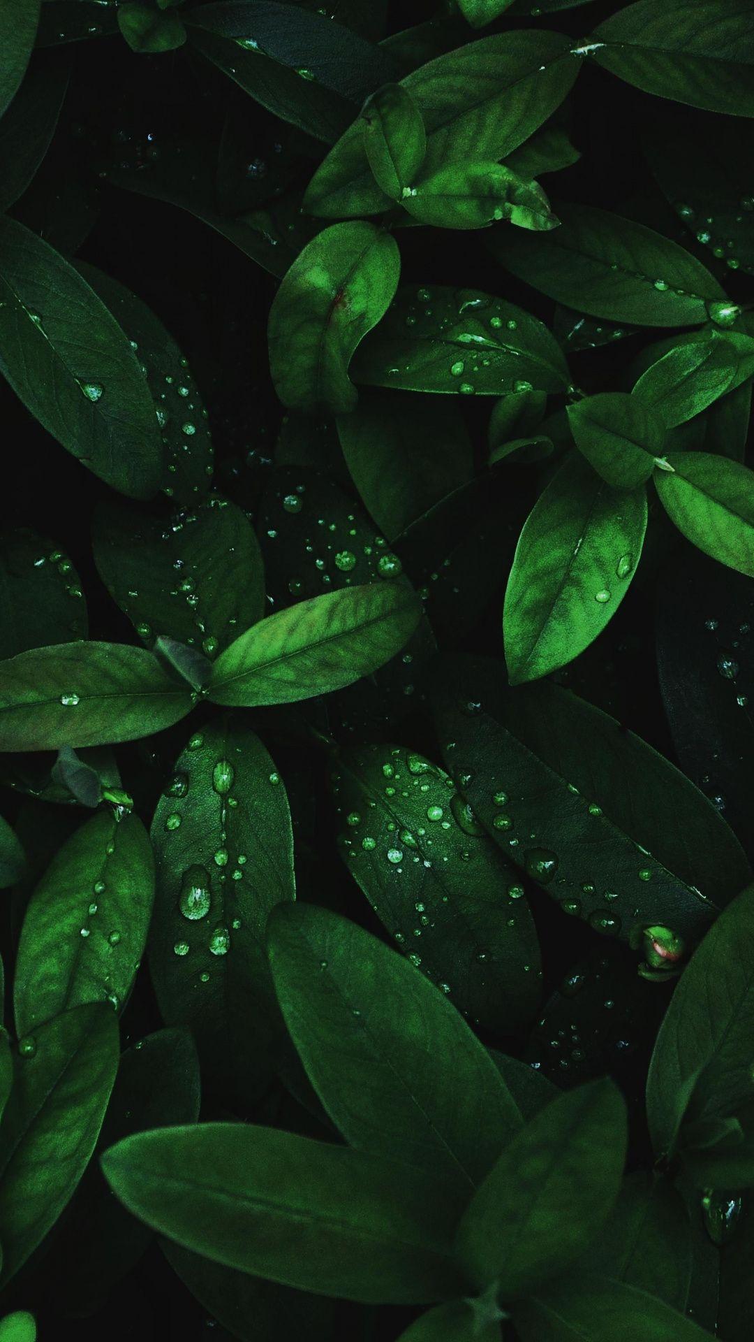 Flora Drops Green Leaves 1080x1920 Wallpaper Zelenye Fony