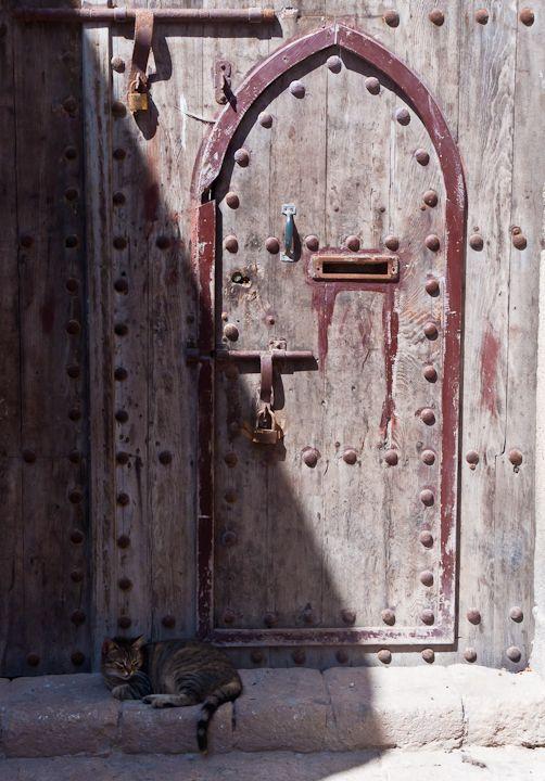 Cat at door in Essaouira, Morocco