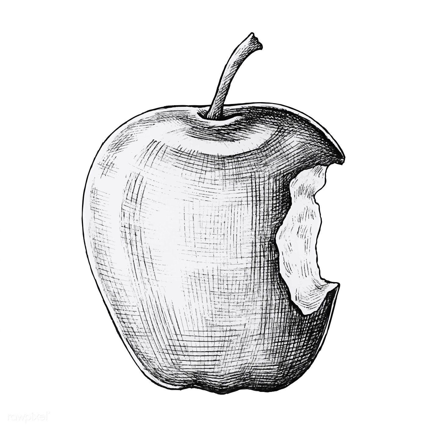 Download Premium Vector Of Hand Drawn Bitten Apple Vector 1200183 How To Draw Hands Apple Vector Drawing Apple