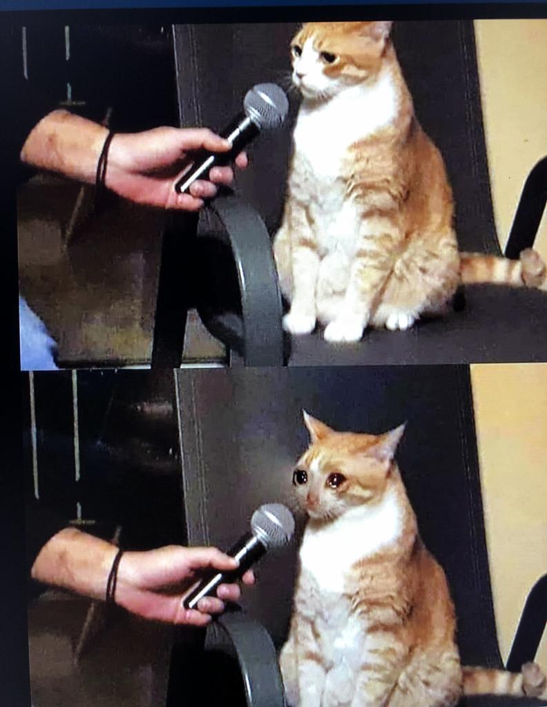 Top 29 Crying Cat Memes Кошачьи мемы, Мемы, Кошки