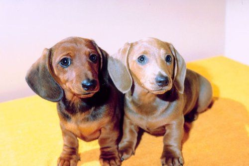 2 wiener dogs! One named Stacey and one named Clinton :)