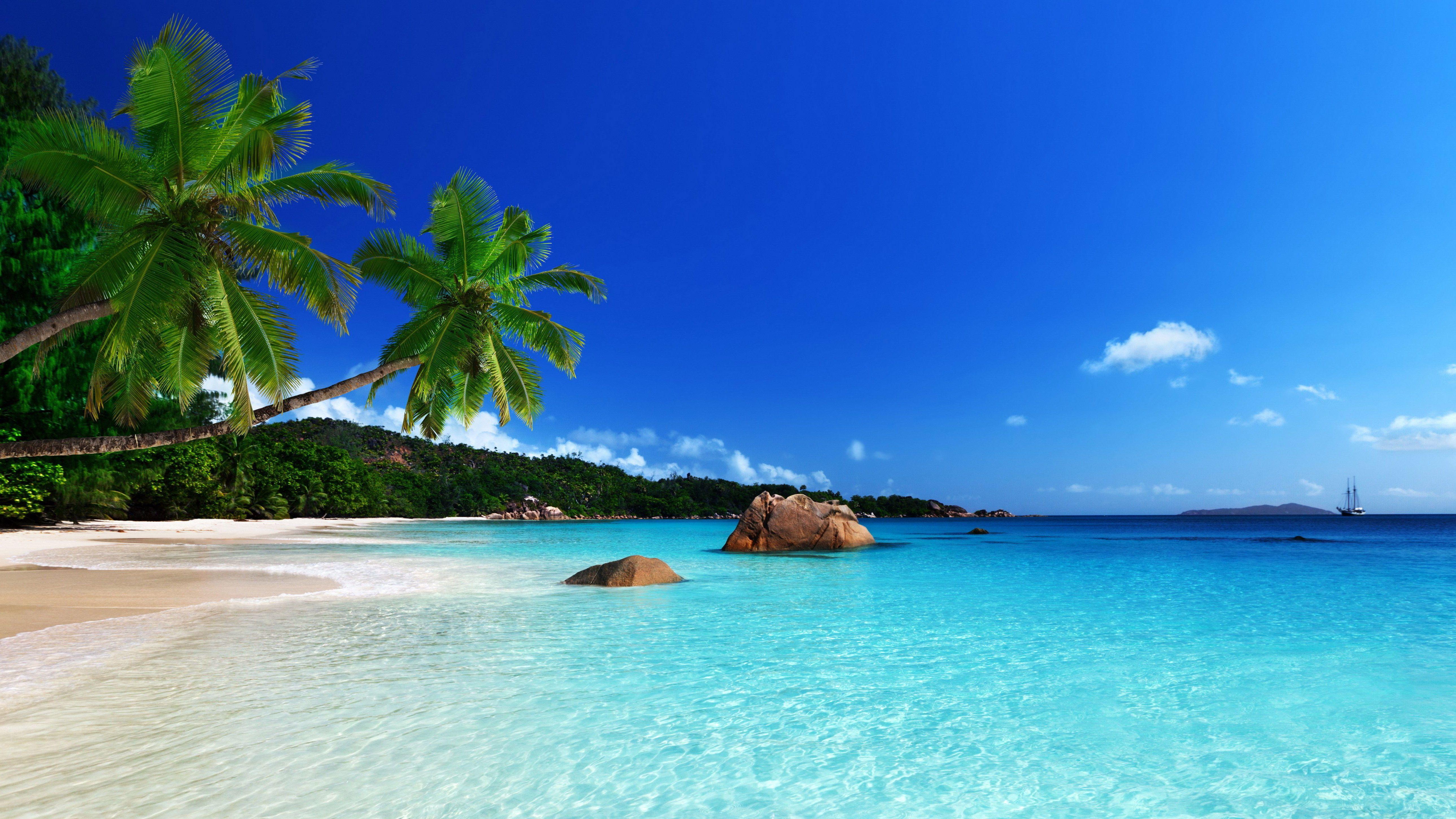 cocotiers magnifique paysage mer