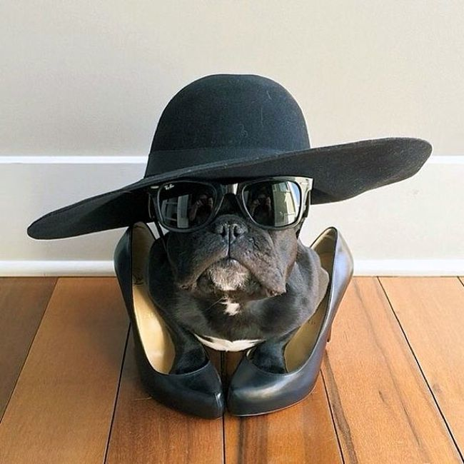 35 Dogs Who May Be More Stylish Than You