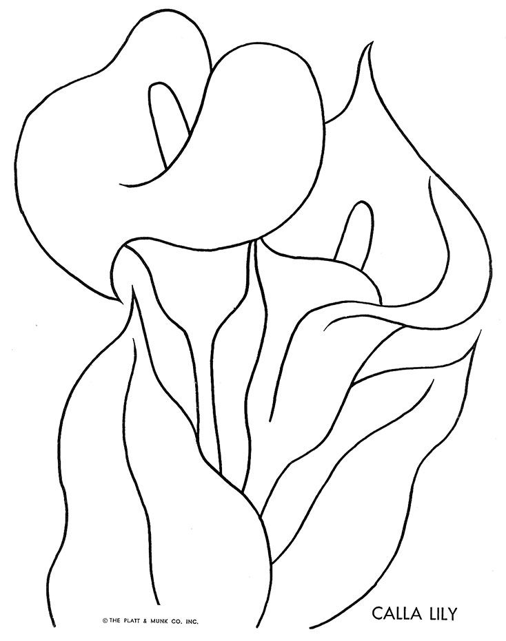 Flowers To Color Fritzi Brod Illustrator Platt And Munk 1951 Gallery Link File Columns 2 Size M Lilies Drawing Flower Drawing Watercolour Texture Background