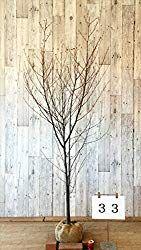 Photo of 【最新】シンボルツリーおすすめランキングを作ってみま…