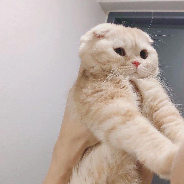 14 cute kittens that might just save the world - mila blogg - #die # k ... -  14 cute kittens that might just save the world – mila blogg –#the #Kitten #Just #Rescue #sweet  - #amazinganimals #animalbackgroundiphone #animalwallpaperiphone #basicanimaldrawings #blogg #cute #die #kittens #might #mila #Save #world