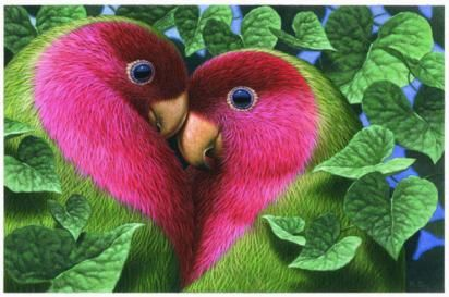 Cute Love Birds Photos Wallpapers