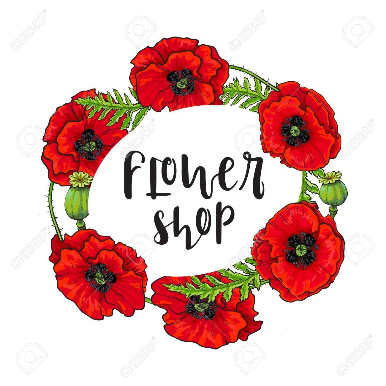 Vector red poppy flower blooming flower shop template