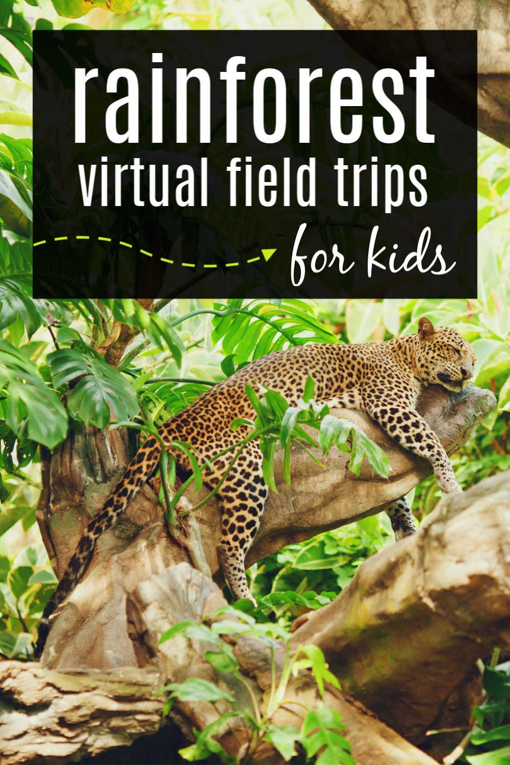 A Virtual Field Trip to the Rainforest with Videos and Songs for Kids