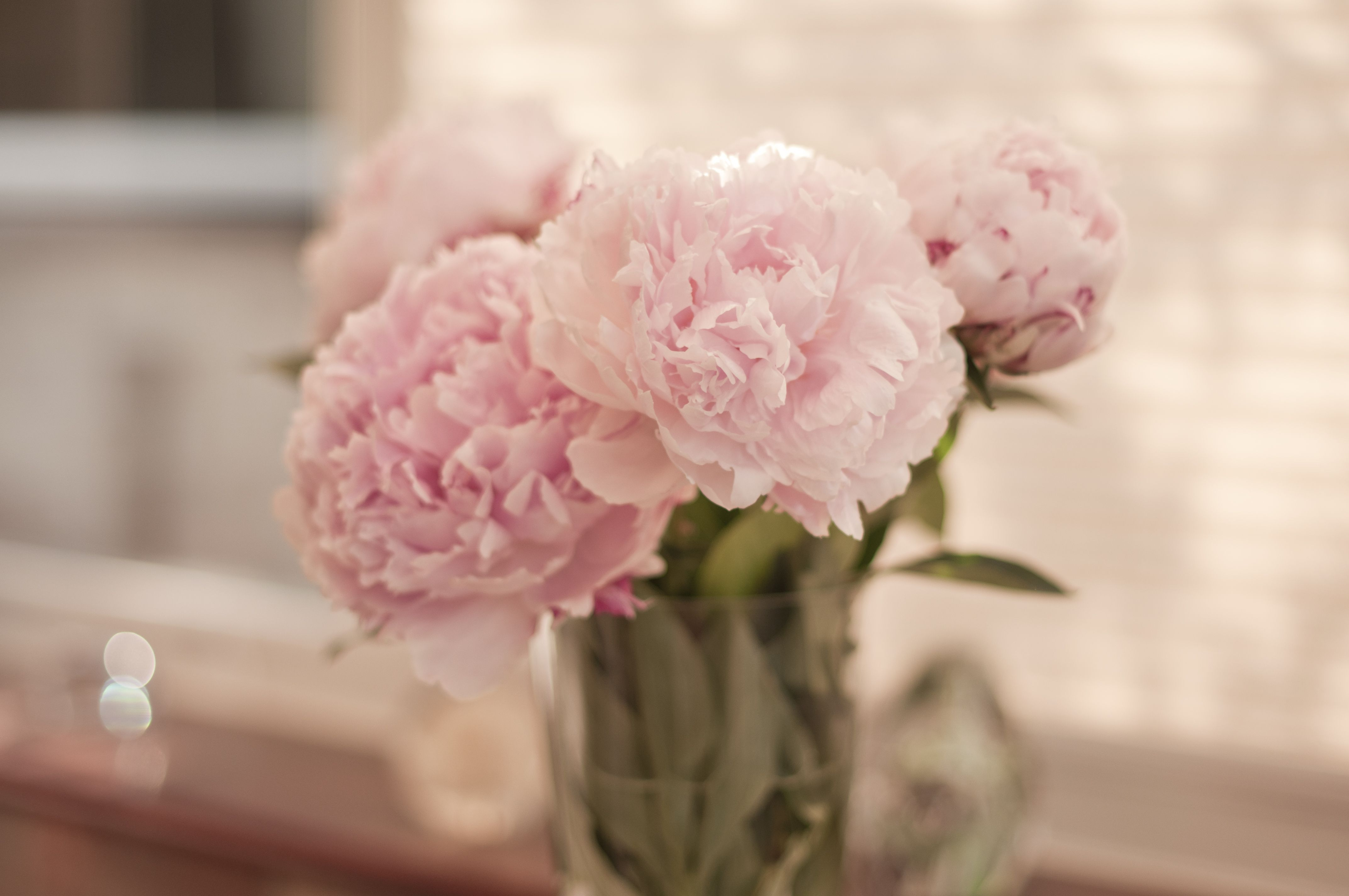 Gorgeous Peonies | M Y W E D D I N G S - kayleighpope.co.uk | Pinterest
