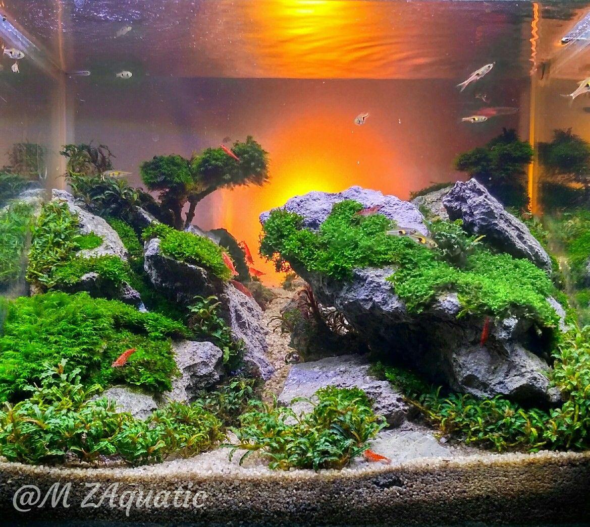 Nano Tank Sunset Aquascape Pemula Indonesia Api Aquarium