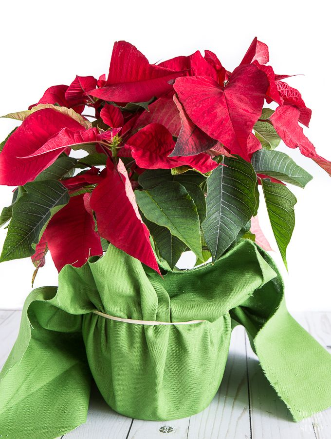 Creative Way To Wrap A Christmas Plant Or Flower Pot Christmas Plants Flower Pots Diy Gifts To Make