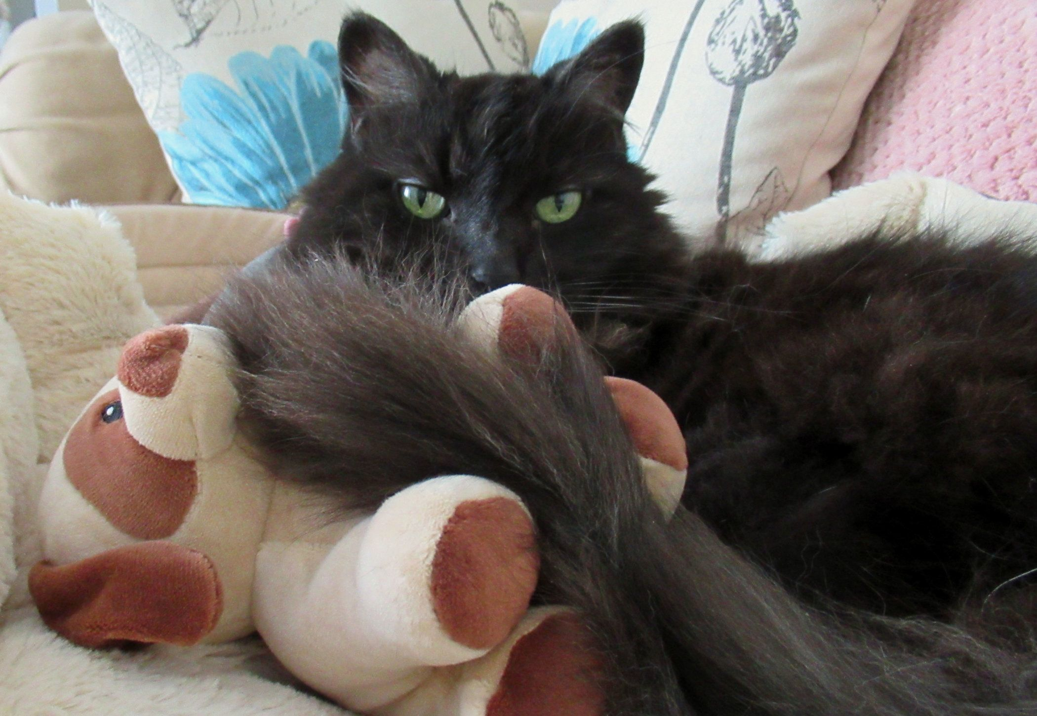 How Teddy Is Finding Comfort After Losing His Brother Katzenworld In 2020 Feline Pet Pet News Your Pet