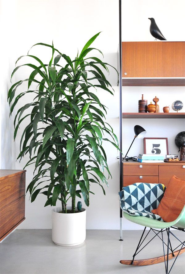 Tall House Plants interior styling | indoor plants | home + interior | pinterest
