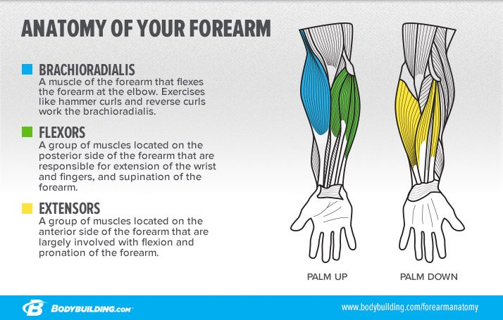 How To Build Monster Forearms | Pinterest | Biceps, Exercises and Arms
