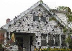 giant spider halloween google search