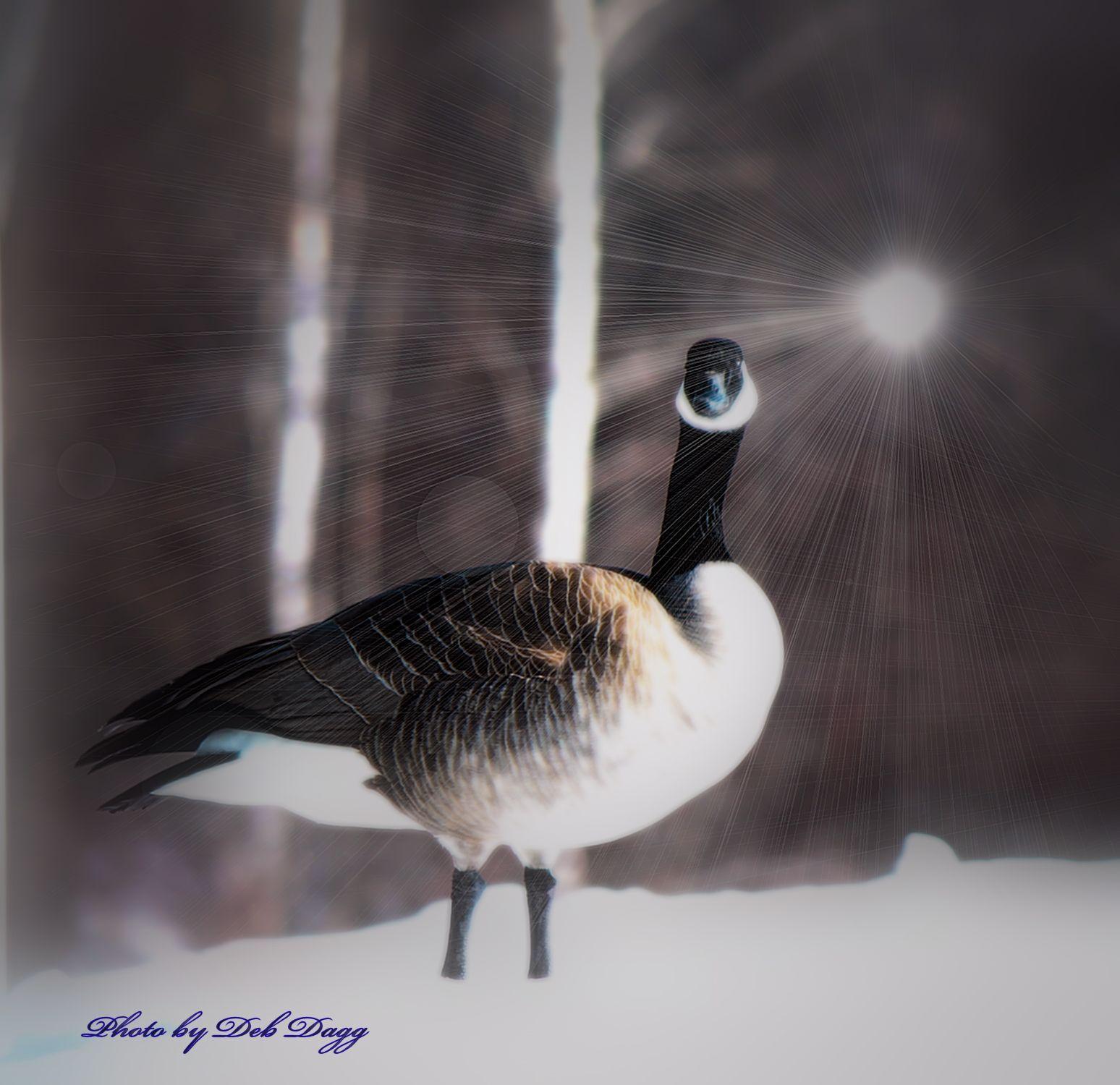 Canada Goose Accesorios Pareja