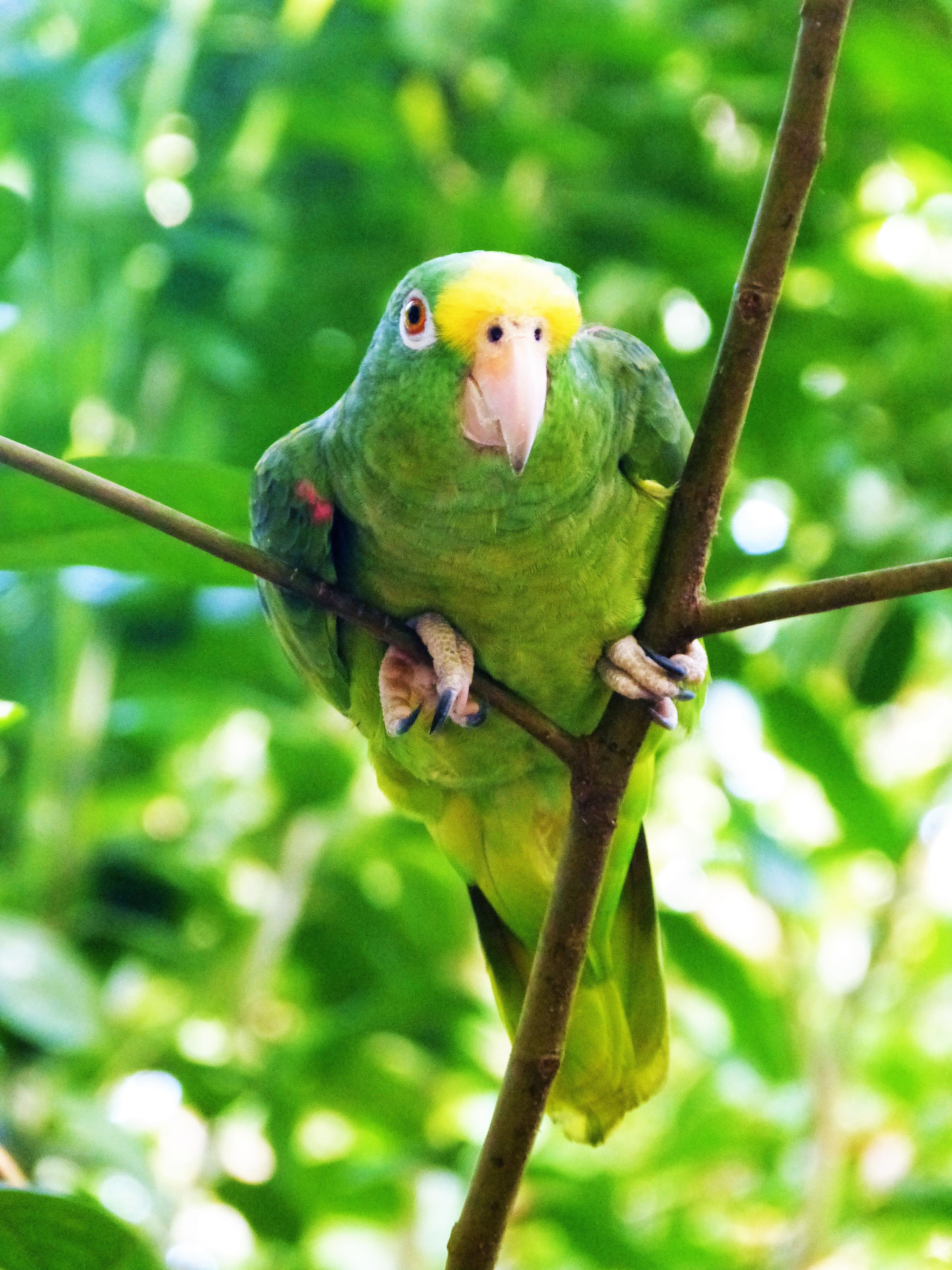 Colombia is home of the second largest biodiversity on earth. In fact, Colombia is home to over 130,000 species of plants. This cute little parrot does also find its place here. #travelandmakeadifference #ecotourism #travel #animal #parrot #ecotourism #biodiversity #earth #nature #fauna #wildlife