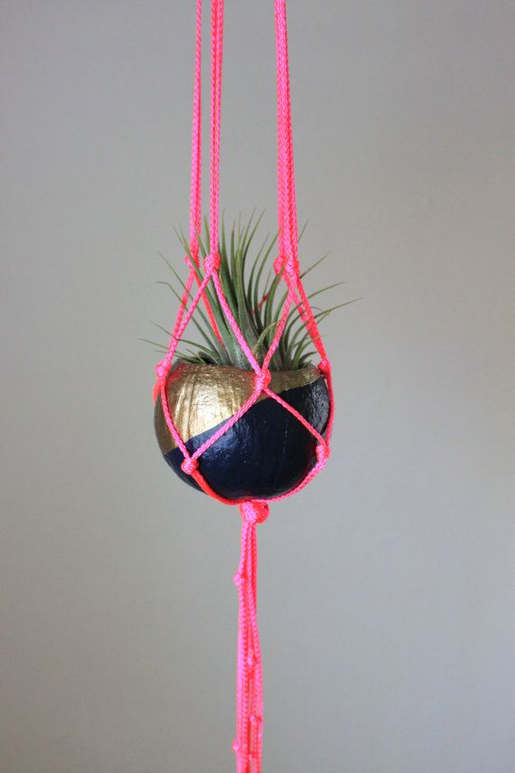 Neon Macrame Hanger with Tillandsia Air Plant in Pod Planter - Navy, Gold & Neon Pink