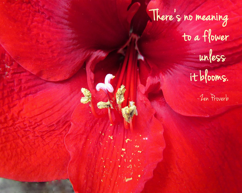Beauty Break 205 Flower Quotes Zen Quotes Zen Proverbs